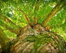 Drzewa - inspirujące rośliny. Niezwykłe zdolności drzew.